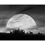 Printed Art Landscape Moonlight Silhouette, Farmington by Monte Nagler