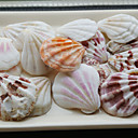 Beach Themed Shells - Set of 4 Packs (35 pieces/Pack)